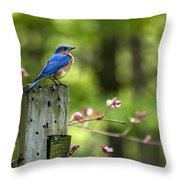 Eastern Bluebird Throw Pillow by Christina Rollo
