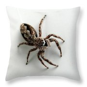 Elegant Jumping Spider Throw Pillow by Christina Rollo