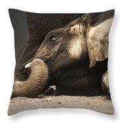 Elephant - lying down Throw Pillow by Johan Swanepoel