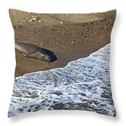 Elephant Seal Sunning On Beach Throw Pillow by Garry Gay