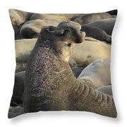Elephant Seals Throw Pillow by Bob Christopher