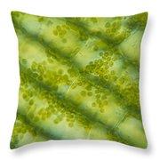 Elodea Algae Throw Pillow by James M. Bell