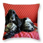 English Cocker Spaniel on Red Sofa Throw Pillow by Catherine Sherman