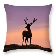 Enjoying The View Throw Pillow by Darren  White