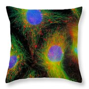 Epithelial Cells In Mitosis Throw Pillow by Jennifer C Waters
