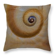 Eye of the Snail Throw Pillow by Susan Candelario