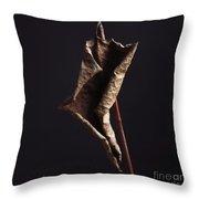 Fallopia Japonica Throw Pillow by Bernard Jaubert