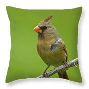 Female Cardinal Throw Pillow by Claudio Bacinello