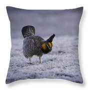 First Light 2 Throw Pillow by Thomas Young