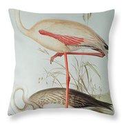 Flamingo Throw Pillow by Edward Lear