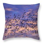 Flight Of The Blackbirds Throw Pillow by Darren Fisher