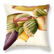 Flower Of The Banana Tree  Throw Pillow by Georg Dionysius Ehret