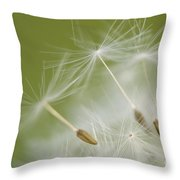 Fly Away Throw Pillow by Anne Gilbert