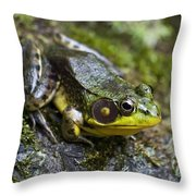 Fly Catcher Throw Pillow by Christina Rollo