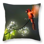 Flying Cardinal Landing On Branch Throw Pillow by Dan Friend