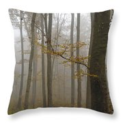 Forest In Autumn Throw Pillow by Matthias Hauser