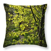 Forest Path Throw Pillow by Elena Elisseeva