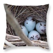 Four Red-winged Blackbird Eggs Throw Pillow by J McCombie