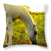 Freckles At Sunset Throw Pillow by David Morefield