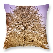 Frosted Branches Throw Pillow by Marty Koch