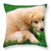 Fuzzy Golden Puppy Throw Pillow by Christina Rollo