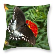 Garden Spice Butterfly Throw Pillow by Christina Rollo