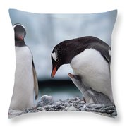 Gentoo Penguin With Chick Begging Throw Pillow by Konrad Wothe