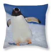 Gentoo Waddle Throw Pillow by Tony Beck