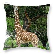 Giraffe Eats-09053 Throw Pillow by Gary Gingrich Galleries