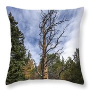 Gnarly Tree - Pancake Rocks - Divide Colorado Throw Pillow by Brian Harig