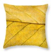 Golden Beech Leaf Throw Pillow by Anne Gilbert