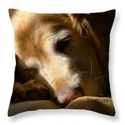 Golden Retriever Dog Sleeping in the Morning Light  Throw Pillow by Jennie Marie Schell