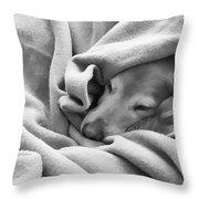 Golden Retriever Dog Under The Blanket Throw Pillow by Jennie Marie Schell
