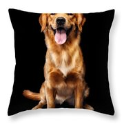 Golden Retriever On Black Background Throw Pillow by Oleksiy Maksymenko