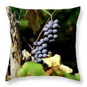Grape Harvest Throw Pillow by Neal  Eslinger