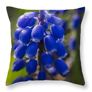 Grape Hyacinth Throw Pillow by Adam Romanowicz