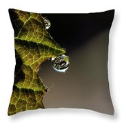 Grape Leaf With Rain Drop Throw Pillow by Cindi Ressler