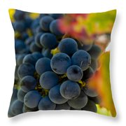 Grapes On The Vine Throw Pillow by Bill Gallagher