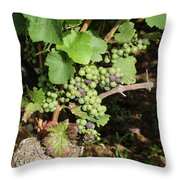 Grapevine. Burgundy. France. Europe Throw Pillow by Bernard Jaubert