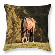 Grazing Horse At Sunset Throw Pillow by Michelle Wrighton