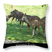 Greater Kudu Throw Pillow by Chris Flees