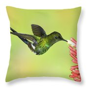 Green Thorntail Hummingbird Throw Pillow by Anthony Mercieca