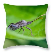 Grey Plant Bug 1 Throw Pillow by Douglas Barnett
