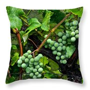 Growing Season Throw Pillow by Frozen in Time Fine Art Photography