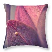 Gulf Fritillary Butterfly Egg Throw Pillow by Priya Ghose