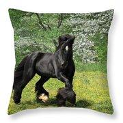 Gypsy Stallion Shadow Throw Pillow by Fran J Scott