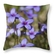 Happy Tiny Bluet Wildflowers Throw Pillow by Kathy Clark