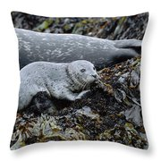 Harbor Seal Pup Resting Throw Pillow by Suzi Eszterhas