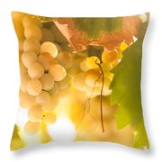 Harvest Time. Sunny Grapes Vi Throw Pillow by Jenny Rainbow