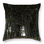 Hawaiian Banyan Tree - Hilo City Throw Pillow by Daniel Hagerman